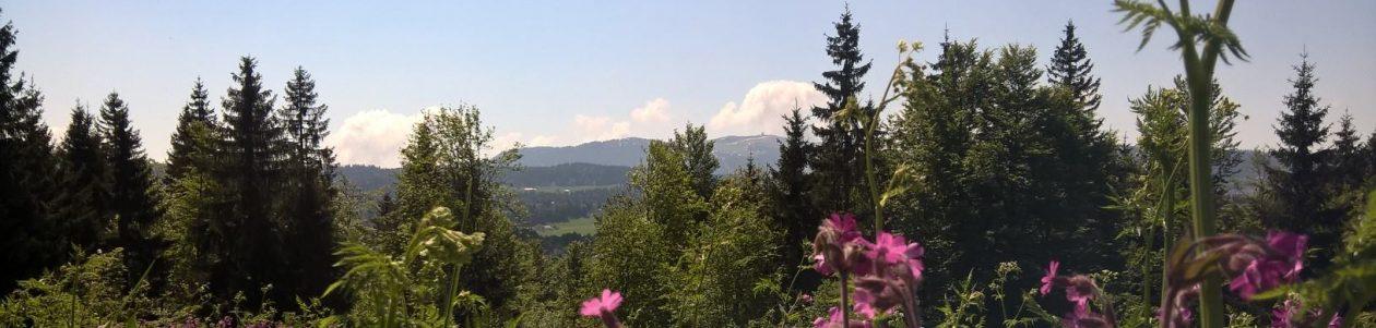 La loge à Ponard station des Rousses Haut-Jura/ Buvette d'alpage  /  Refuge / randonnée raquette / animation nature / grimpe d'arbre